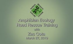 North Branch Nature Center - Amphibian Ecology Road Rescue Training