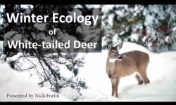 Braintree and Randolph Conservation Commissions Presents - Winter Ecology of White-tailed Deer