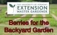 UVM Extension Master Gardener: Berries for the Backyard Garden